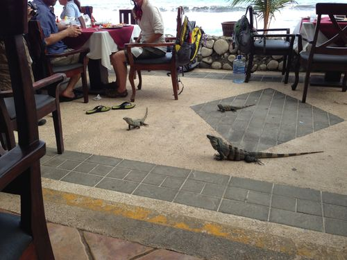 Lunch guests